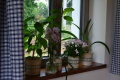 kytky_v_kvetinacich_kanafas