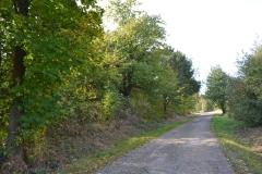 cesta_podzim