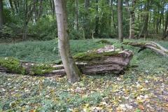 podzim_zamecky_park