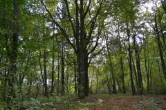 zamecky_park_stromy