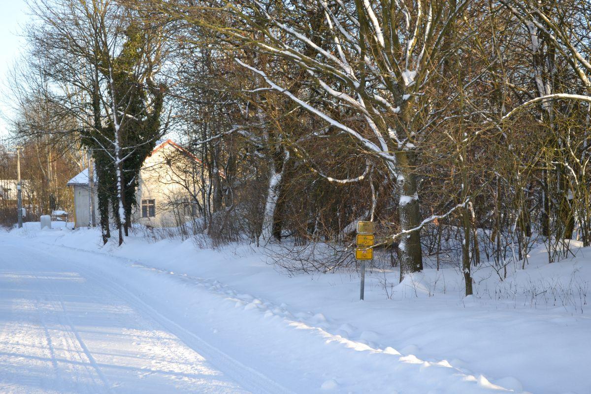 chalupa_cesta_stromy