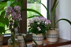 kytky_v_kvetinacich